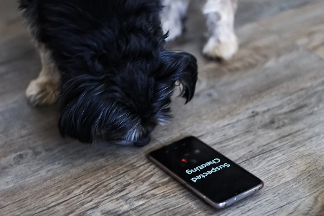 Image of dog with phone for post on checking your partner's phone - The Style of Laura Jane
