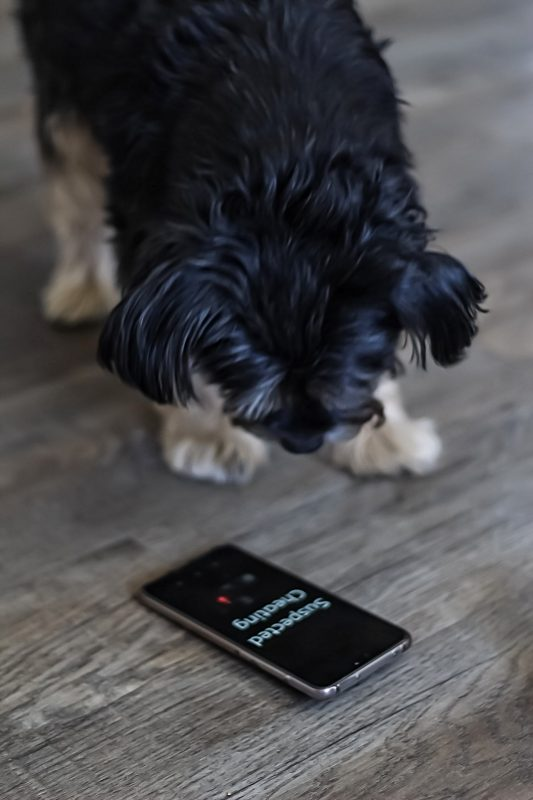 dog with phone - suspected adultery - The Style of Laura Jane