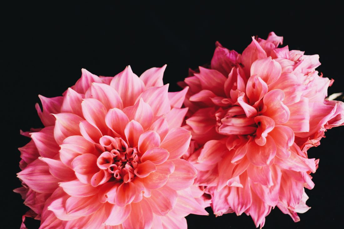 closeup of pink flowers on black tableblog on How do you build trust and intimacy